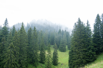 Regentag im Wald