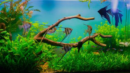 natural aquarium with fish
