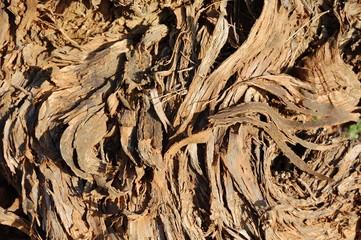 Textura de corteza de tronco de cepa