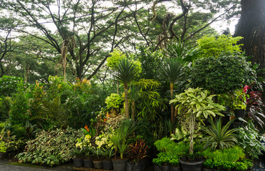 Various kind of plant and flower arranged like a little jungle and sell by florist photo taken in Jakarta Indonesia