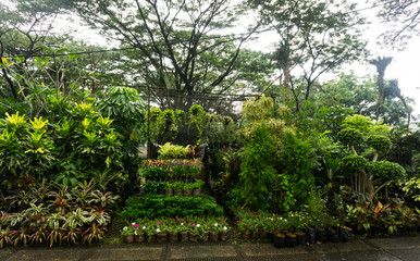 vertical garden arranged by hanging plant and flower sell by florist photo taken in Jakarta Indonesia