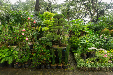 Various kind of plant, bonsai and flower arranged like a little jungle and sell by florist photo taken in Jakarta Indonesia