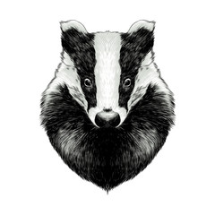 head badger symmetric, sketch vector graphics color picture