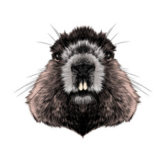 head Groundhog hairy symmetric, sketch vector graphics color picture