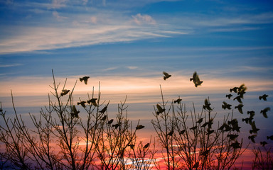Angry birds on a branch, blue cloudy sky