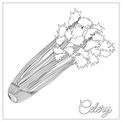 Celery. Page for coloring book. Doodle, zentangle design.Vegetables. Vector illustration. Black and White sample.