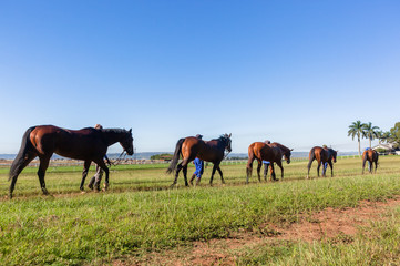 Race Horses Grooms Training Landscape