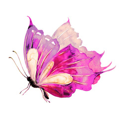 beautiful violet  butterfly, isolated  on a white,watercolor