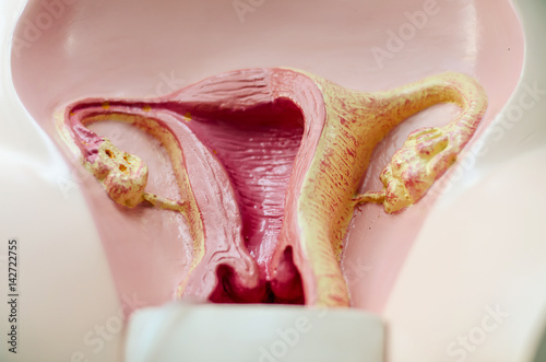 Find vulva Stock Images in HD and millions of other royaltyfree stock photos illustrations and vectors in the Shutterstock collection Thousands of new high