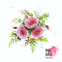 Watercolor illustration of dogrose branch on white background.