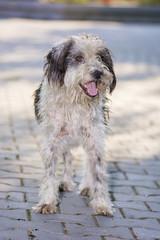 Dog posing for camera