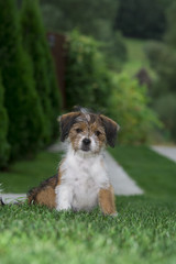 Cute little dog playing and posing for camera