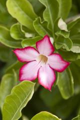 Beautiful flowers of Israel.