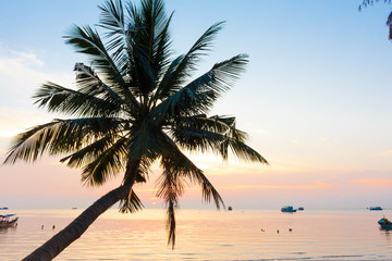 Sunset with palm tree at Koh Tao in Thailand