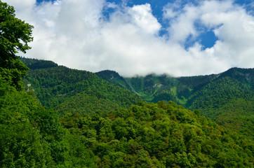 Caucasian green mountains
