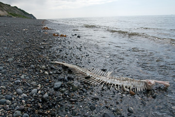 skeleton on coast, Alaska