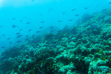 Tropical fishes on the coral reef. Diving