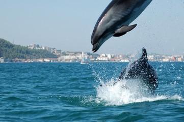 Golfinhos de agua doce