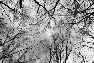 Tree Branches Against Sky Black and White