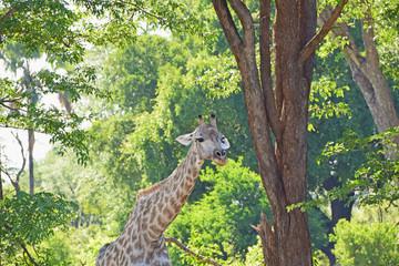 Africa Wildlife (Zambia)