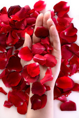 Beautiful woman hand among red petals