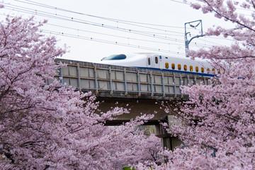 満開の桜と新幹線