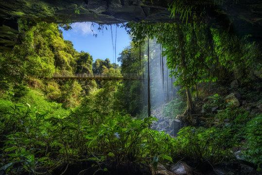 Footbridge and Crystal Falls  in the Rainforest of Dorrigo National Park, Australia