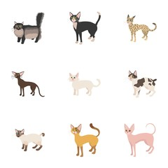 Pet icons set, cartoon style