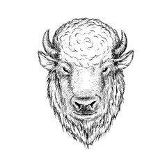 head of buffalo