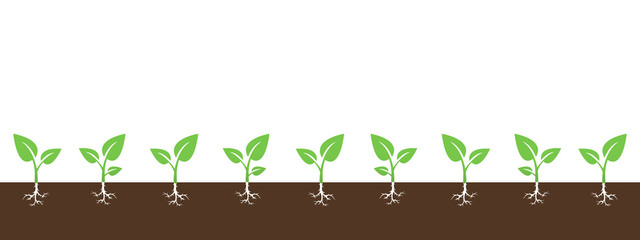 Vector background with growing sprouts