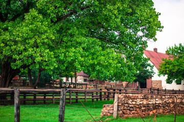 Irene Farm