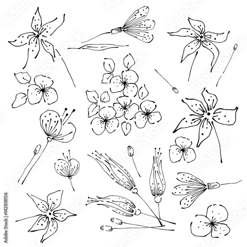 Contour Line Drawing Leaves : Quot vector floral set graphic illustration flowers with