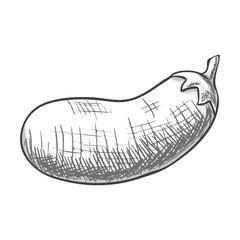 Monochrome sketch style eggplant isolated. Eco organic fresh vegetable. Vector.