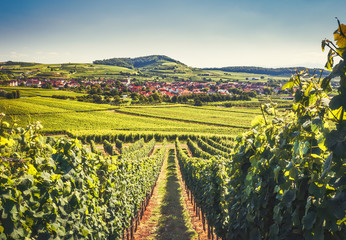 Countryside landscape with a historic village, traditional houses and vineyards. Scenic view of Kaiserstuhl, Germany, Black Forest. Beautiful summer travel background.