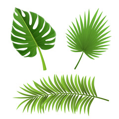 Different type of palm tree leaf set, isolated on white. For exotic and summer frame, background or design.