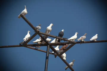 Taubenversammlung auf einem Kreuz