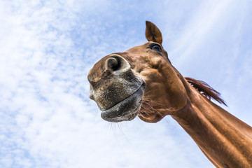 head and neck of horse under blue sky