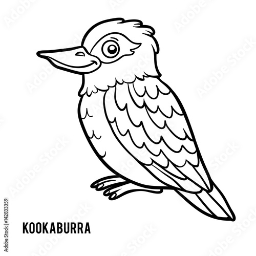 Coloring Book Kookaburra Stock Image And Royalty Free Vector Files