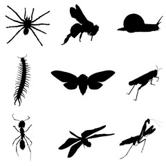 Vector set of silhouettes of insects.