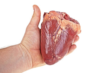 Beef heart in men's hand on a white background