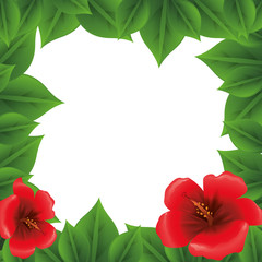 picture frame leaves nature flowers vector icon illustration