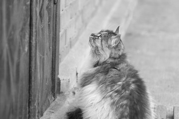 Monochrome photo of cat in the village