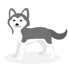 Husky breed dog icon, flat, cartoon style. Cute puppy isolated on white background. Vector illustration, clip-art