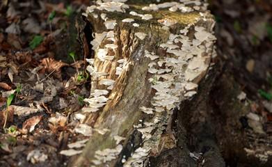 tronc coupé couvert de champignons