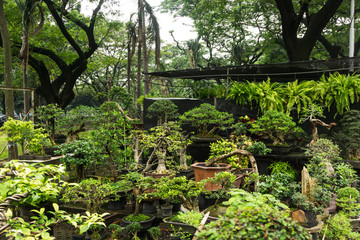 Various kind of Bonsai tree sell in plant store for decorative plants photo taken in Jakarta Indonesia