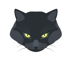 Bombay black cat breed close-up portrait on white
