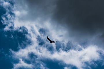 Raven against Cloud