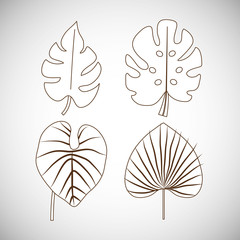 tropical leaves icon set over white background. vector illustration