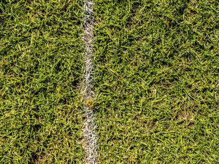 White line marking on lush green grass, sports field soccer