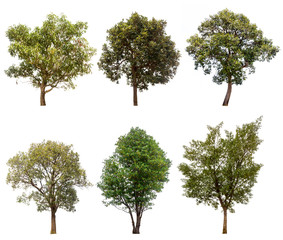 collections green tree isolated on white background.
